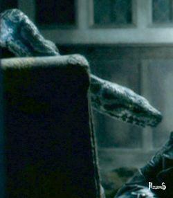 Nagini Harry Potter - PotterPedia.it