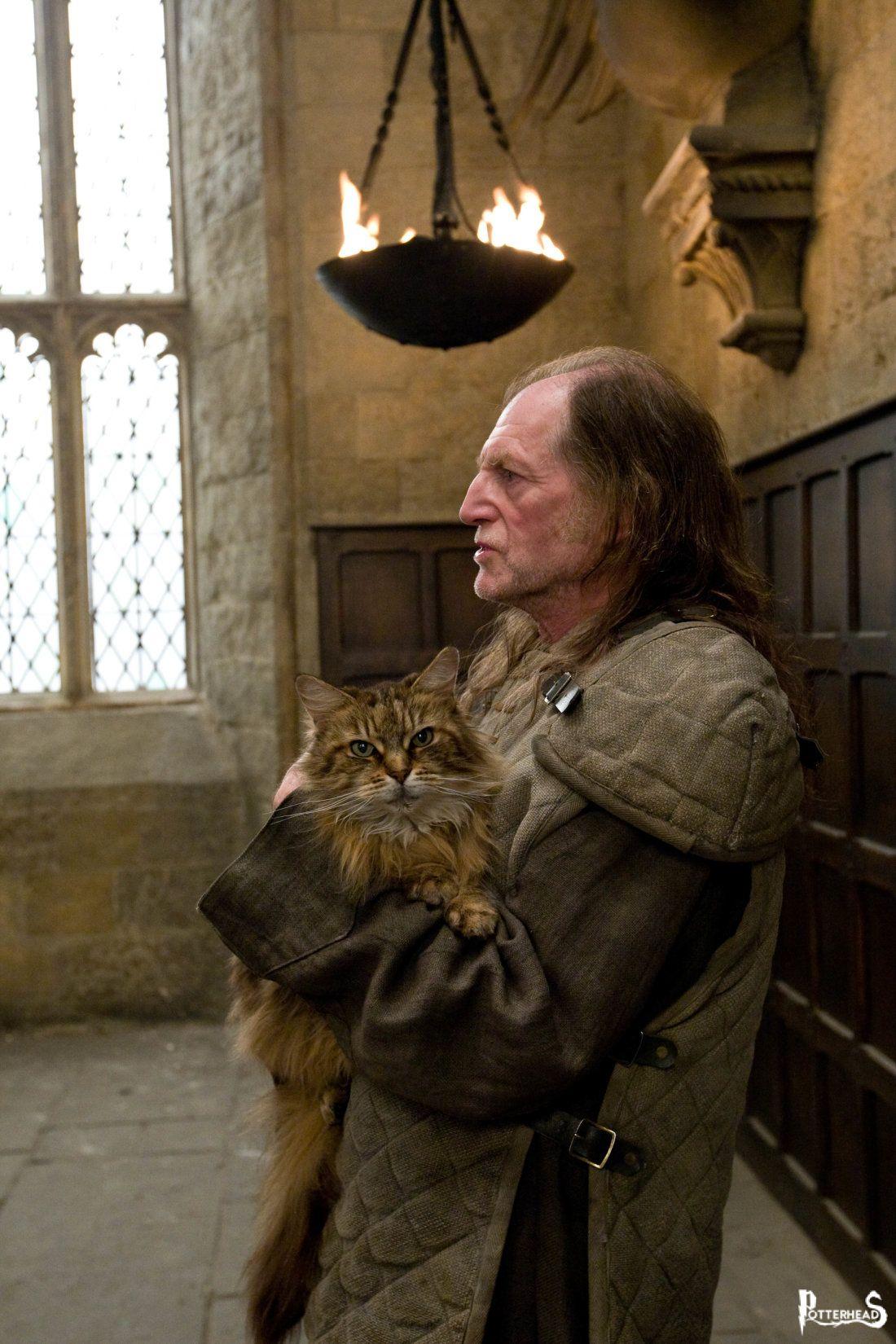 Mrs. Purr Harry Potter - PotterPedia.it