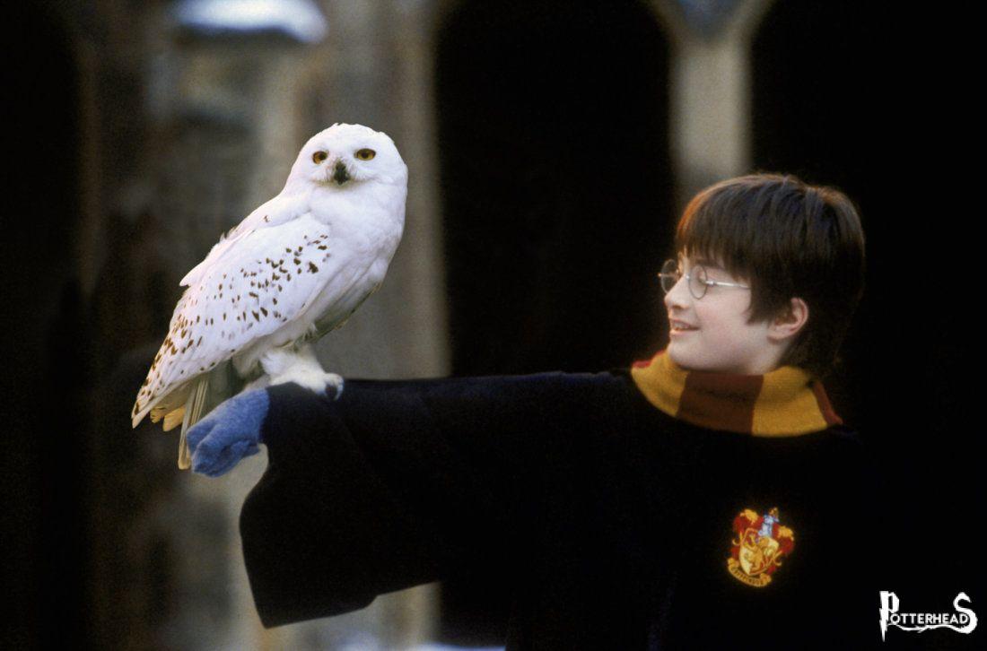 Edvige Harry Potter - PotterPedia.it