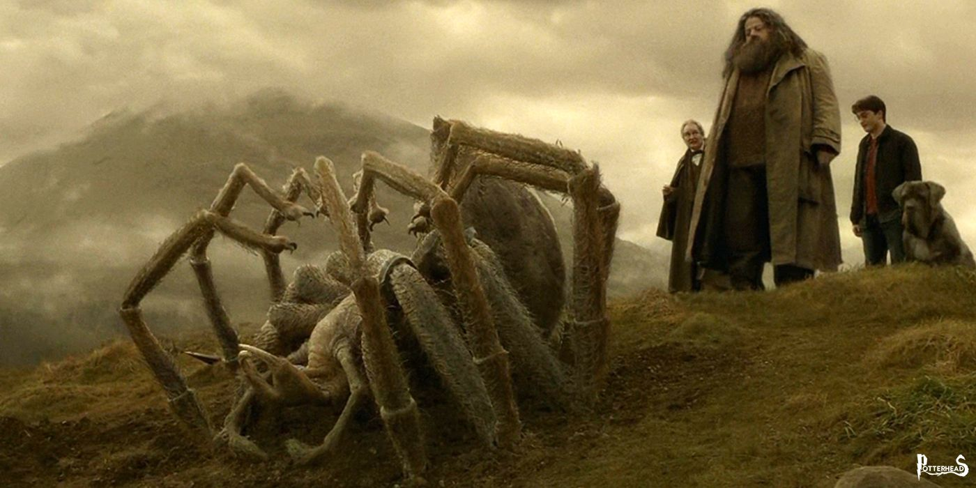 Funerale di Aragog Harry Potter - PotterPedia.it