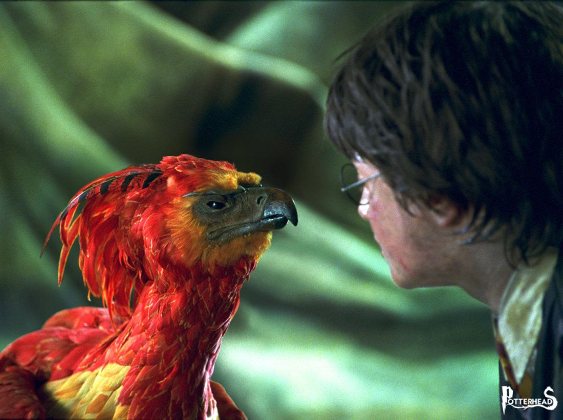 Fanny Harry Potter - PotterPedia.it