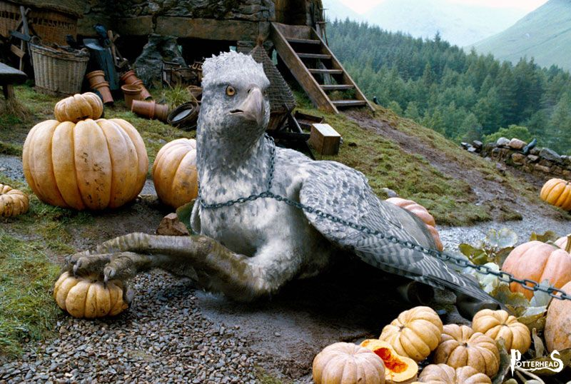 Ippogrifo Harry Potter - PotterPedia.it