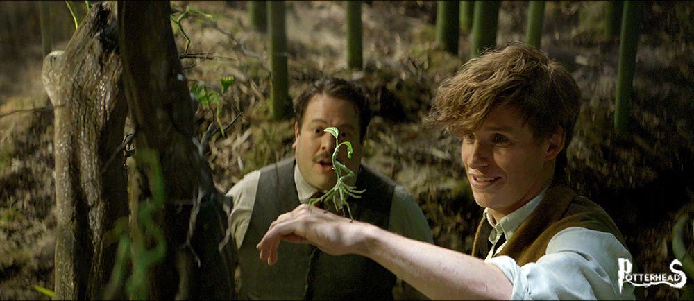 Magizoologo Harry Potter - PotterPedia.it