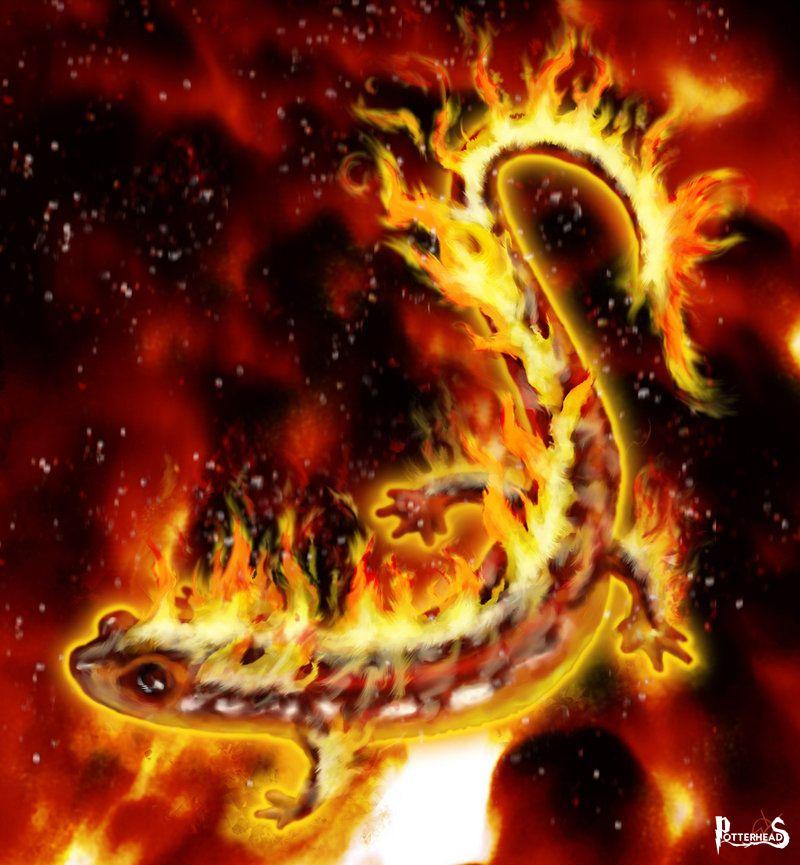 Salamandra Harry Potter - PotterPedia.it