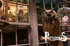 Gufo Harry Potter - PotterPedia.it